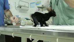 MVI 0676 Kitten on pets treatment table Footage