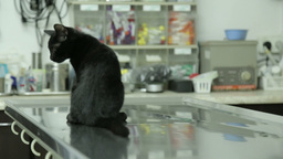 MVI 0671 Black cat waiting for check at the vet hospital Footage