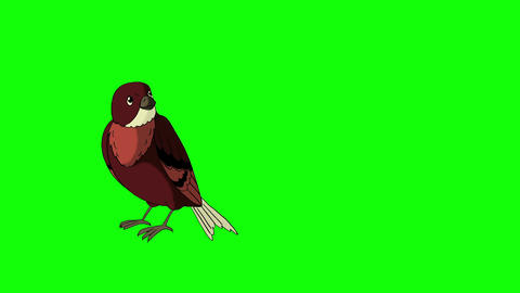 Brown Bird Came Flying Animation