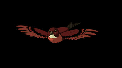 Brown Bird Flies. Front View Animation