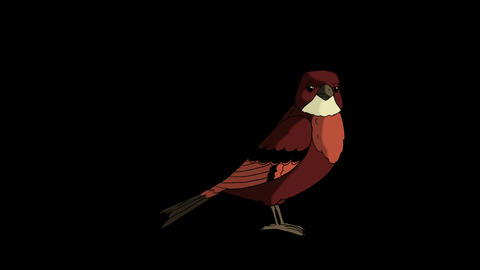 Brown Bird Jumping Animation