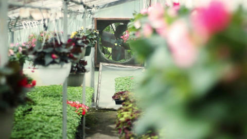 Interior establishing shot of a greenhouse garden supply store business during s Footage