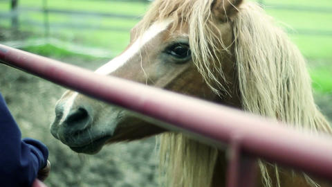 Cinematic shot of brown horse at petting zoo behind fence Footage
