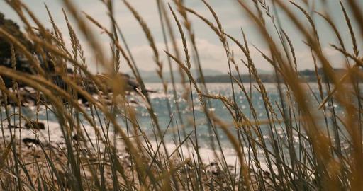 Beautiful Rack Focus Through Seed Onto The Atlantic Ocean, Norway - Cinematic St Footage