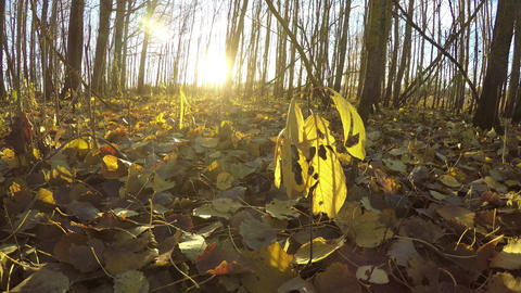 Fallen leaves on the ground in forest, time lapse 4K Footage