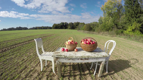 Table with apples, two chairs and cat in the field, time lapse 4K Footage