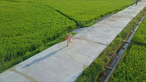 Aerial View Girl Runs on Concrete Road among Rice Fields Footage