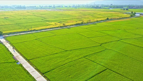 Aerial Motion down Road among Rice Fields against Hills Footage
