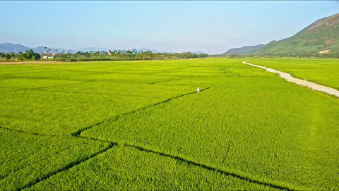 Drone Flies along Road among Green Rice Fields by Mountains Footage