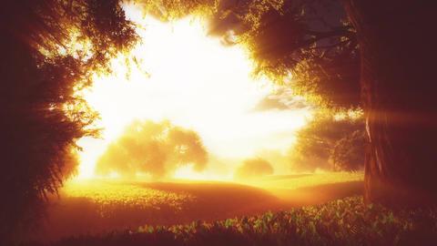 Amazing Natural Wonderland in the Sunset Sunrise with Lightrays 4 Animation