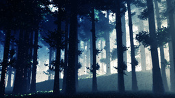 Mysterious Deep Pine Forest with Fireflies v2 2 Animation