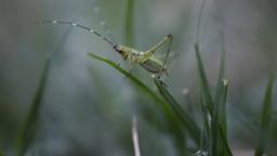 Green bug macro Live Action
