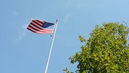 American (USA - United States of America) flag - green tree - blue sky - sunny Footage