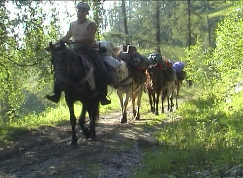 Transportation Of Tourist Equipment By Horses stock footage