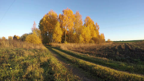Landscape with birch trees grove in rural fields, time lapse 4K Footage
