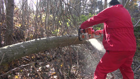 Man dressed red cutting timber Footage
