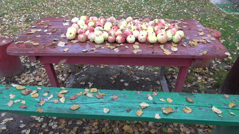 Leaves and apples on table in the autumn with falling birch tree leaves Footage