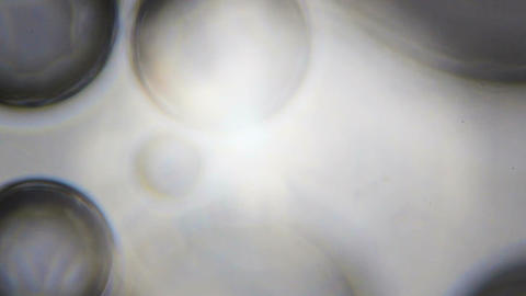 Water bubbles under the microscope Footage