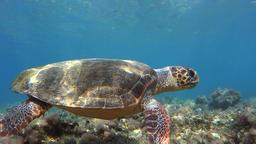 Underwater sea turtle wink Footage