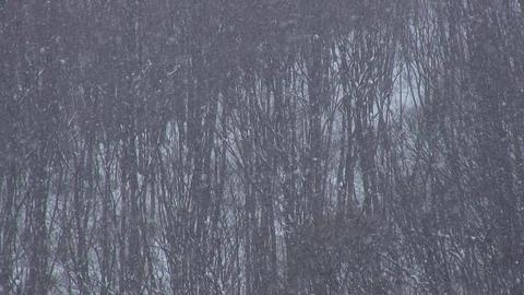 Snow Fall / Winter / Trees - Shizukuishi (Iwate, Japan) - Fix ビデオ