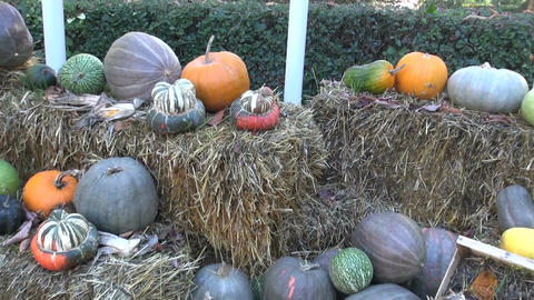 Display of various pumpkins on straw Footage