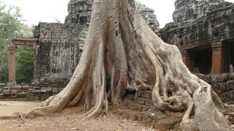Banyan Tree Angkor Wat 4K Footage