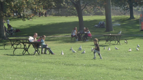 Family and friends picnic in the park feeding birds Footage