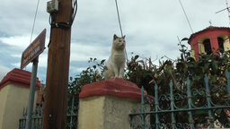 A cat is sitting on a column Footage