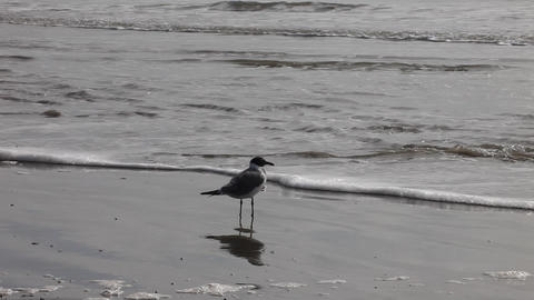 Seagull On A Beach Shore stock footage