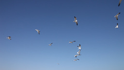 Seagulls flying in the air Footage