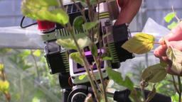 Research on photosynthesis in deciduous, beech, scientific study, technology Footage