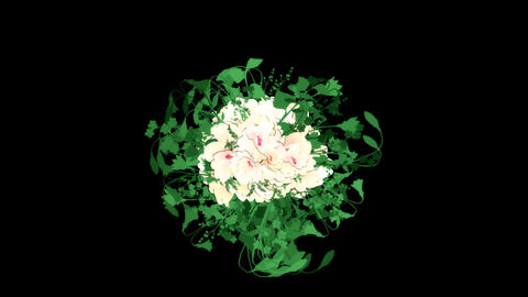 Blooming White Flowers Bouquet and Leaves Animation Graphic Element. Alpha Chann Animation