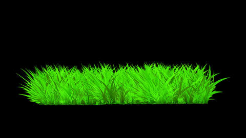 Growing Grass Animation Graphic Element. Alpha Channel included Animation
