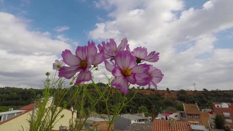 Flowers On Balcony Footage