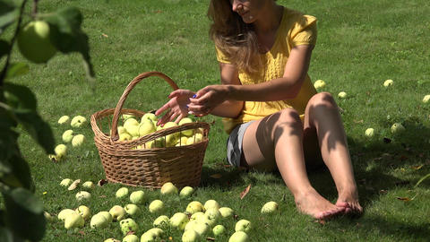 garden worker woman sitting on ground and gathering windfall ripe apples fruits. Footage