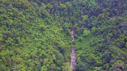 Drone Flies over Rocky Stream Running in Wild Jungle Footage