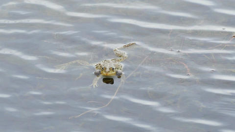 Frog Pond Sight 4k Footage