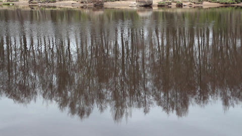Inverted spring forest reflected in a river Filmmaterial