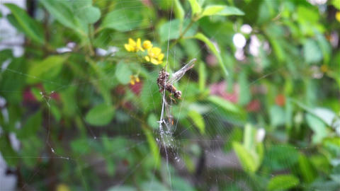 Spider web on green leafs which has wind blows ビデオ