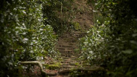 Ancient Path through Rainforest Footage