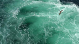 Spain Galicia City of Vigo 056 swirling turquoise water with seagulls above Footage