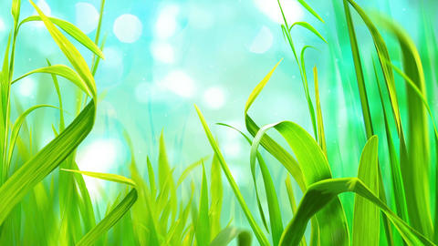 Sky And Grass (5) Animation