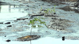 Tree threatened by oil and toxic substances Footage
