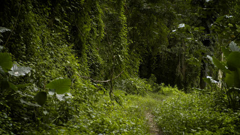Tropical Forest Pathway Stock Video Footage