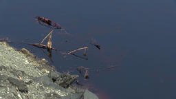 Dragonflies flying over oil spills Footage