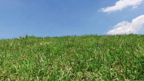 Scenery of sky and grass Footage