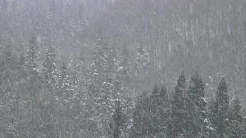 Heavy Snow Fall / Winter / Trees - Shizukuishi (Iwate, Japan) - Fix