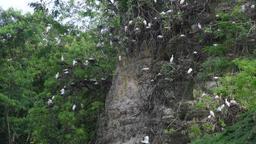 Birds sitting on a rock Footage