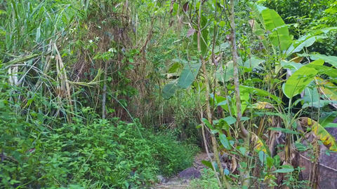 Drone Flies over Narrow Trail Lost in Deep Wild Jungle Live Action