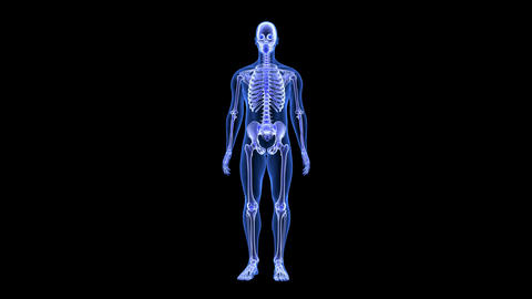 Joint Pain. Blue Human Anatomy Body 3D Scan render - rotating seamless loop CG動画素材